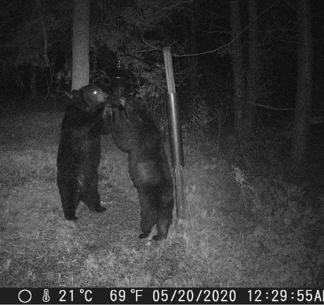 Bear Feeder For Two_01.JPG