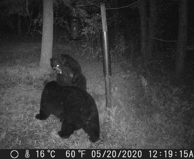 Bear Fight_01.JPG