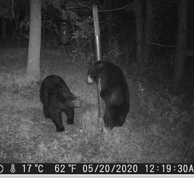 Bear Fight_04.JPG