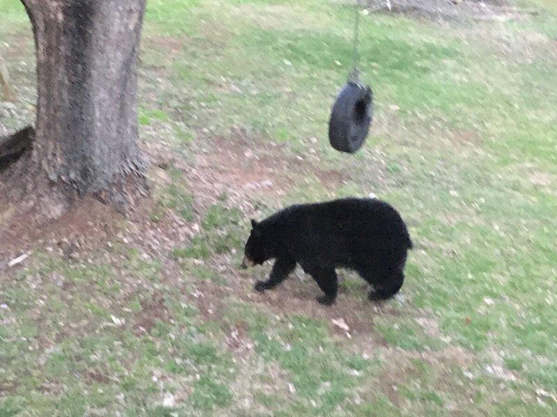 Bear_Apr 29-20_02.jpg