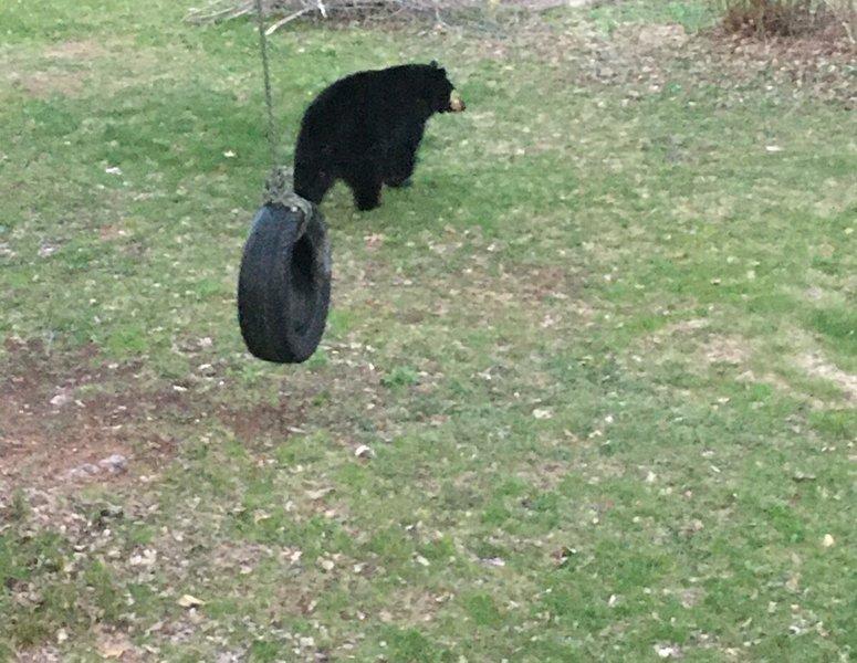 Bear_Apr 29-20_04.jpg