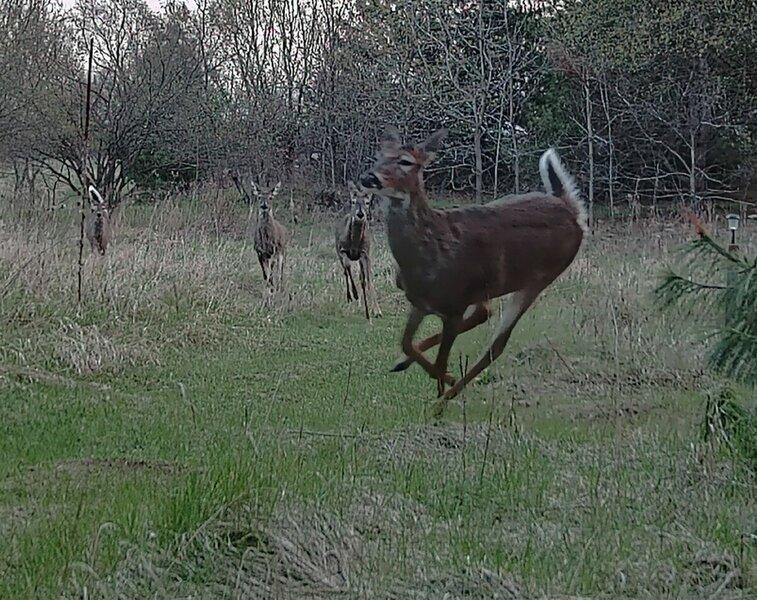 Deer Run_02.jpg