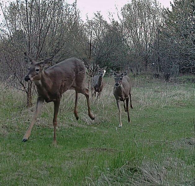 Deer Run_04.jpg