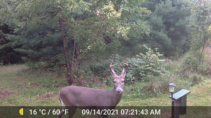 Deer_BUSTED_01.jpg