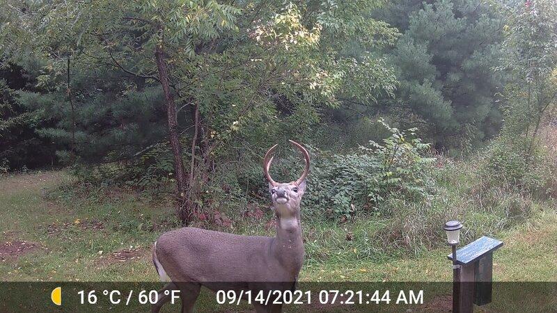 Deer_BUSTED_02.jpg