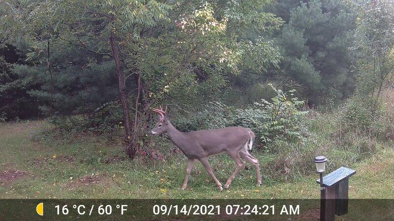 Deer_Not Busted_01.jpg