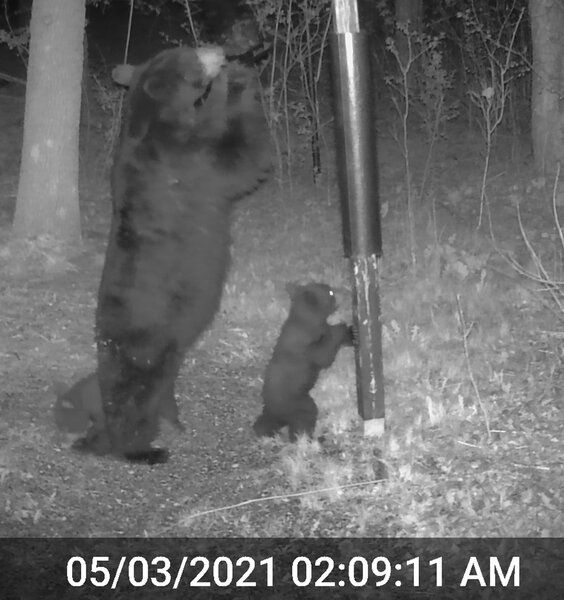 Mama Bear and Triplets_02.jpg