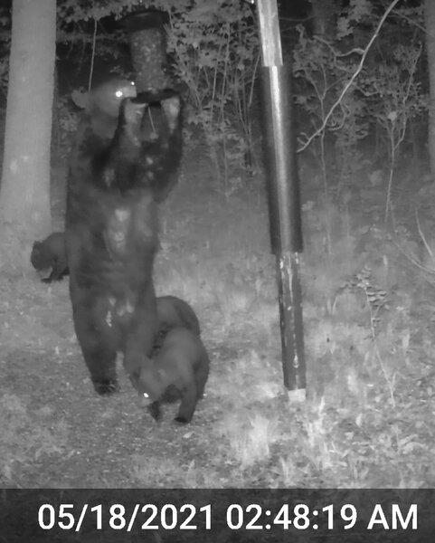 Momma Bear_Triplets_2_01.jpg