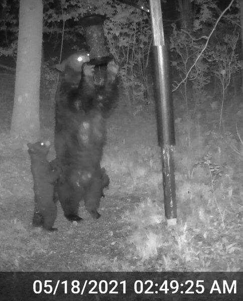 Momma Bear_Triplets_2_02.jpg