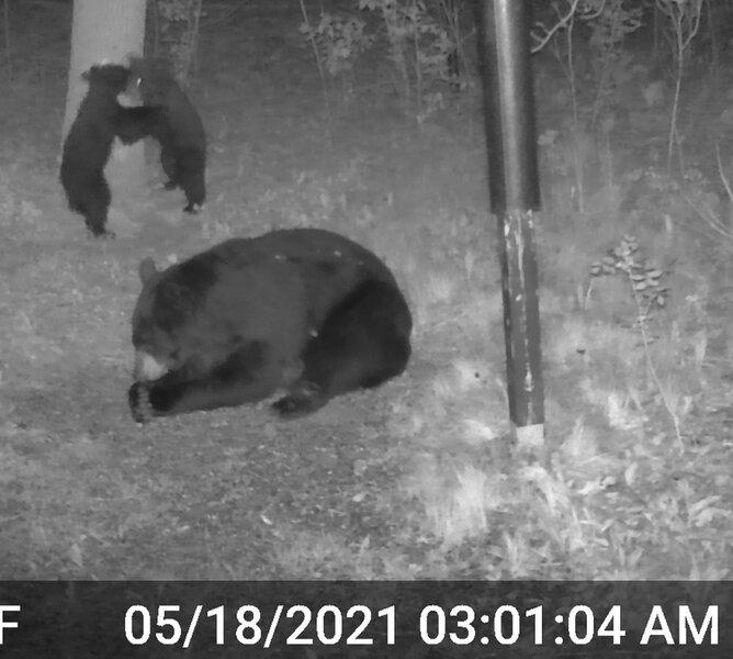 Momma Bear_Triplets_2_06.jpg