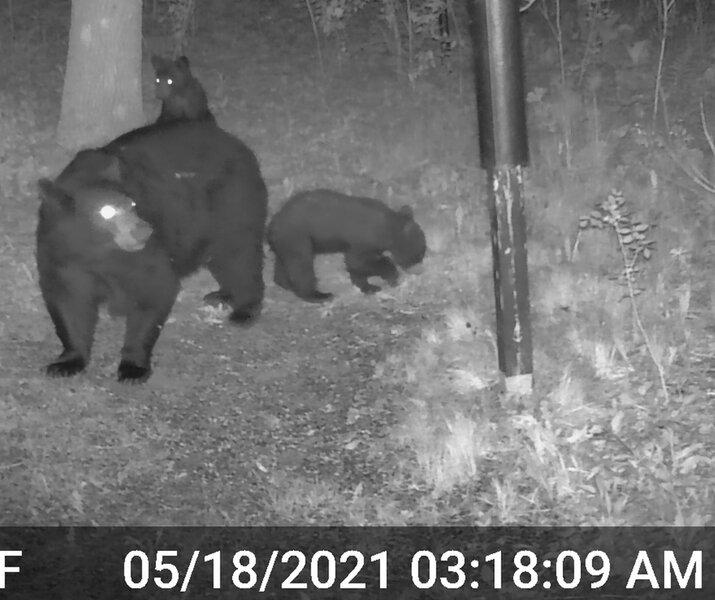 Momma Bear_Triplets_2_07.jpg