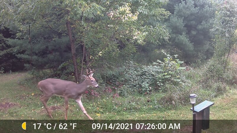 Smaller Deer_01.jpg